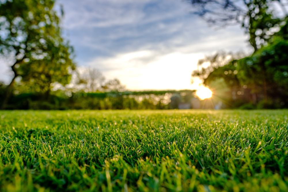 eco-friendly lawn for your family