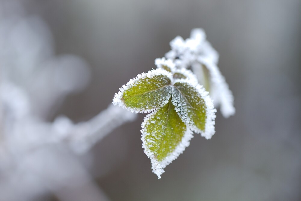 growing plants and vegetables in winters